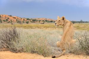 Du Kalahari au Cap de Bonne Espérance